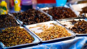 Imagen Insectos Comestibles